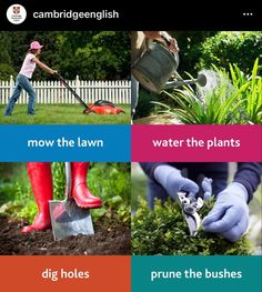 Lawn Mower, Home Furniture, Garden Sculpture, Water, Outdoor Decor, Plants, House, Lawn Edger, Gripe Water