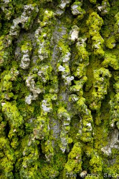 Moss Covered Tree Bark Texture In Photography