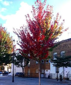 Autumn in London   #leaf #leaves #redleaves #trees #travelgirl #autumncolors #autumntrees #beautiful #colors #colorful #fall #fallcolors #travelgram #amazing #london #travel #autumninlondon #fallinlondon #londonlovers #londonlife #beautifulsky #lovelyday
