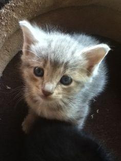 friends kitten :)