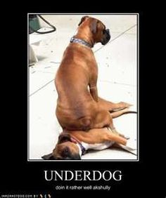 Dont be the underdog!  Upgrade to Proheart 6 the every 6 month heartworm injection and get a free heartworm test this month only!!! Call today for your appointment!