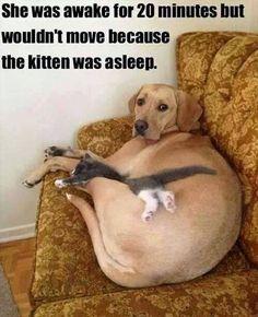 Dog cares for kitten - http://funnyout.com/dog-cares-for-kitten/