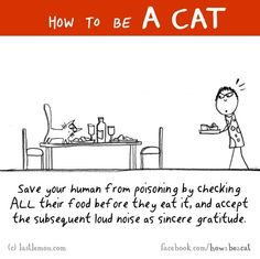 How to be a cat!