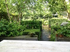Summer view from the house towards the communal garden beyond.all white hydrangeas with a hint of purple from the alliums Landscape Design, Garden Design, Eclectic Taste, Notting Hill, Wakefield, Wood Bridge, Back Gardens, Topiary, Garden Projects