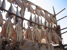 Séchage des poissons dans le port de Diu (Gujarat) L'Inde compte de nombreuses zones côtières, et donc une grosse industrie de pêche. Ici, le séchage des poissons sur l'île de Diu, ancien comptoir portuguais à l'extrême sud du Gujarat (et charmant endroit pour quelques jours au calme).