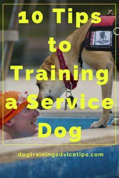 10 Tips to Training a Service Dog | Dog Training Tips | Dog Obedience Training | Dog Training Ideas | http://www.dogtrainingadvicetips.com/10-tips-training-service-dog