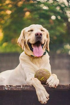 For the love of muddy tennis balls!