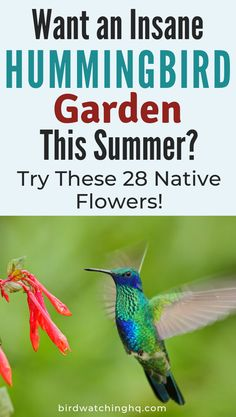 28 Common Flowers That Attract Hummingbirds (Native Easy To Grow Native plants and flowers to put in your garden that will help attract massive amounts of hummingbirds! Hummingbirds love visiting red flowers but will also visit all different colors. Hummingbird Habitat, Hummingbird Nests, Hummingbird Flowers, Hummingbird Garden, Flowers That Attract Hummingbirds, How To Attract Birds, Attracting Hummingbirds, Funny Bird, Humming Bird Feeders