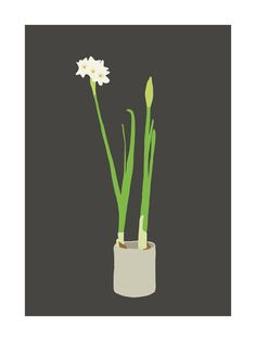 Paperwhites Print by Jorey Hurley for Minted