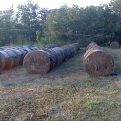 Hay in the bale yard