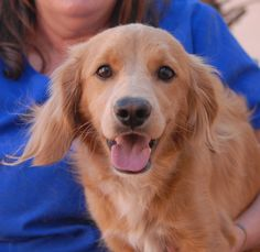 Sonny, an incredibly cute junior puppy with a buoyant personality, ready for adoption at Nevada SPCA: http://nevadaspca.blogspot.com/2014/09/sonny.html