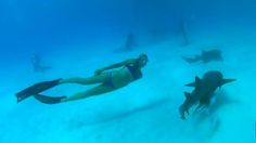 Field Notes: Swimming with Sharks in the Bahamas - SUP Magazine
