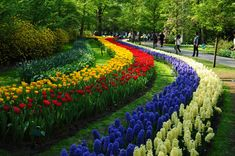 De Keukenhof, Lisse, Holanda  Provavelmente o parque de flores mais bonito do mundo. Localizado a pouco mais de meia hora do centro de Amsterdã, o De Keunkenhof encontra-se no coração da Rijnland, uma das maiores áreas de cultivo de tulipas do planeta.