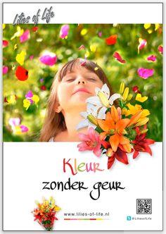 Lilies of Life poster Nederlands