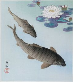 Grey Carps in the Water under White Lotus Flowers - Ohara Koson