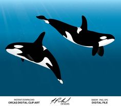 Orca Whales digital clip art digital files features 2 Orca whales All digital files / digital clip art created by Na Digital clip art Clip art Whale