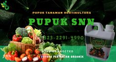 Panen_0823*2292*4990. Jual pupuk SNN, Agen pupuk organik cair Jogja, Distributor pupuk cair SNN, pupuk organik SNN, promo pupuk daun SNN, pupuk cair SNN, murah pupuk SNN, Harga SNN pupuk organik, Jual pupuk organik cair, produsen pupuk organik cair SNN Strawberry, Makassar, Fruit, Food, Essen, Strawberry Fruit, Meals, Strawberries, Yemek
