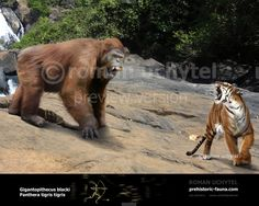Gigantopithecus blacki by Rom-u.deviantart.com on @DeviantArt