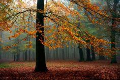 Foggy Forest by thrumyeye.deviantart.com on @deviantART