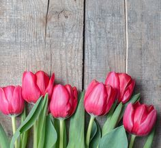10 Weird Facts About Tulips