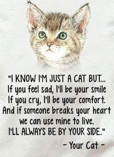 Cat Care Kittens You'll always be in my heart Tigger Trixie Tobie Jimmie Spanky Rudy a - Funny Cat Quotes Crazy Cat Lady, Crazy Cats, I Love Cats, Cute Cats, Funny Cats, Funny Animals, Cute Animals, Wild Animals, Funny Cat Captions
