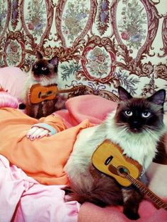 cats in vogue - Google Search