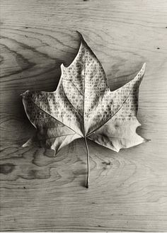 Photography by Chema Madoz #typography #leaf