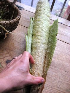 Grow a loofah gourd plant and make my own loofahs, COOL!!!