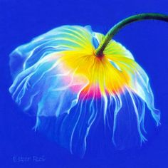 Ester Roi | Artwork | Poppy, No. 2