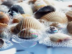 Sea Shells In Water - Beach, Bubbles, Nature, Photography, sea, Sea Shells, Shell, Shells, Sparkle, Water