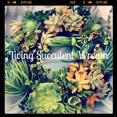 Living Succulent Wreath - Easier than it looks! Links to all supplies. All you need is a wreath form, succulent clippings and pins!