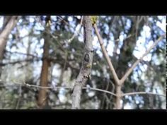 /video by Kalina Stoyanova / The Balance of Nature. At first it seems that a big branch is floating in the air. Actually the branch is carried by a small one. Despite the light wind the two pieces are moving like a one in harmony. Small One, Natural Phenomena, Rainbows, Two By Two, Big, Nature, Naturaleza, Nature Illustration, Rainbow