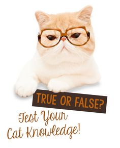 Do you know all there is to know about your feline friends? What's your take on sweets? Do all cats love catnip? Does dry cat food clean your pet's teeth as they eat? Are you paw-sitive you know the right answers? Follow along as eBay shares a quick quiz to test your cat knowledge, and make you a better pet parent!