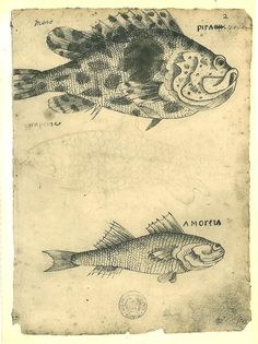 Fishes Maranhao Natural History Art Print Pirauna by carambas, $16.00