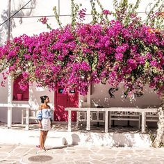 Paros and Antiparos have beautiful little towns full of bougainvilleas, delicious food and incredible sunsets. #paros island #greece