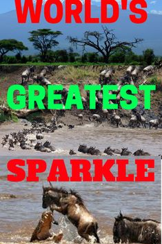 Wildbeest migration is one of the wonders of the world and is usually known as the world's greatest sparkle.It's one of its kind and only happens between Serengeti ( Tanzania) and Masai mara (Kenya). It is an event worth witnessing given a chance.