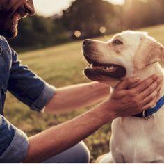 Top Rated Pet CBD Products - CBD Men's Lifestyle