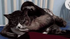 This sloth who has made an even more unlikely alliance | 15 Sloth GIFs You Need To See Today