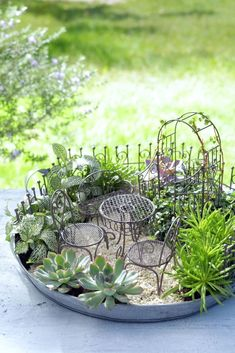 Mini Fairy Garden, Fairy Garden Houses, Garden Cottage, Garden Ideas To Make, Hacks, Miniature Fairy Gardens, Miniature Rooms, Cool Plants, Garden Planning