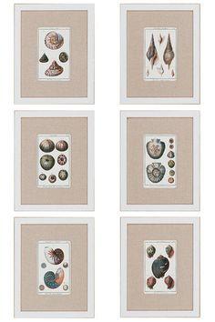 Sea Shells Wall Art - Set of 6. HomeDecorators.com