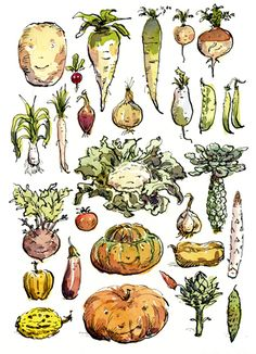I love the idea of a veggie world inhabited by walking talking 'veg' ~ very Muppet-esque!  Cute drawings by Claire Fletcher