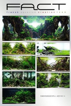 2014 #IAPLC creations by the FACT - French Aquarium Creation Team ! #FACT…