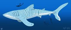 whale_shark_by_gorgeni-d5bhip6.png (2250×956)