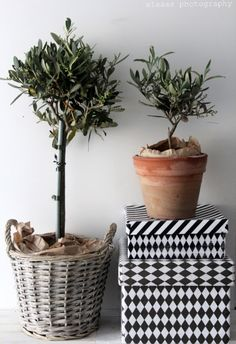stacking boxes for height and add a candle Garden Inspiration, Interior Inspiration, Potted Olive Tree, Green Life, Plant Decor, Garden Planning, Trees To Plant, Tree Decorations, House Plants