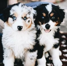 Super Cute Puppies, Cute Baby Dogs, Cute Little Puppies, Cute Dogs And Puppies, Cute Little Animals, Cute Funny Animals, Doggies, Funny Puppies, Puppies Puppies