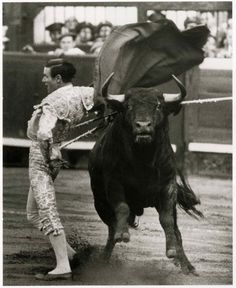 Drama of a Bullfight - Bilbao by Peter Buckley Bilbao, Flamenco Dancers, Bull Riding, Black And White Pictures, Black White, Cattle, Creatures, Horses, Culture