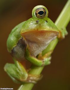 Not cool. He didn't sign up for this.  One eyed frog - aww, a victim of environmental mutations
