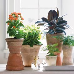 Gardening Indoor A NASA study proved that houseplants play a major role in purifying the air indoors—here's a list of the most powerful varieties. - A NASA-approved study proved that they remove the build-up of three household pollutants. Hanging Plants, Indoor Plants, Indoor Gardening, Indoor Flowers, Potted Plants, Indoor Herbs, Cactus Plants, Gardening Tips, Small Plants
