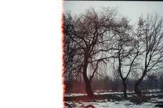 burned trees by Hudynii, via Flickr