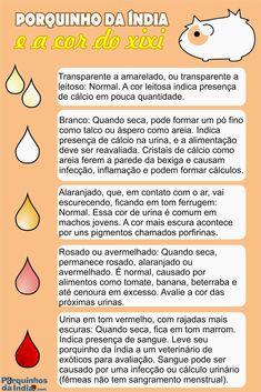Urina+Porquinho+da+Índia.jpg (1067×1600)